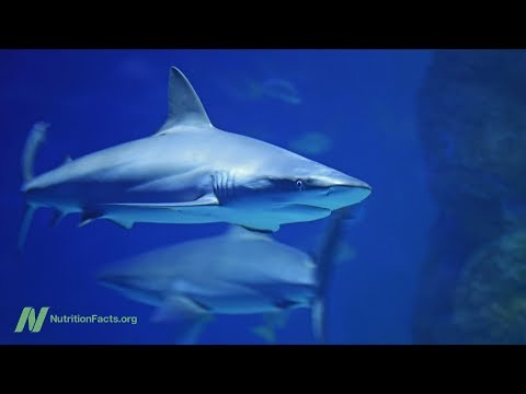 Shark Cartilage Supplements Put to the Test to Cure Cancer
