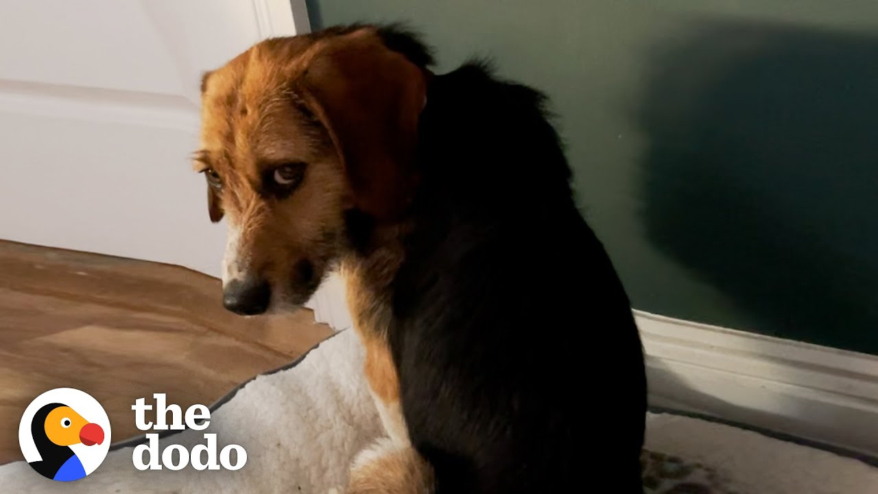 This Dog Stared At The Wall For Hours Until Finally Realized He Was Home   The Dodo Faith Restored