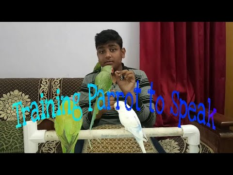 How to Train your Parrot to Speak || Hindi || Bird Mania
