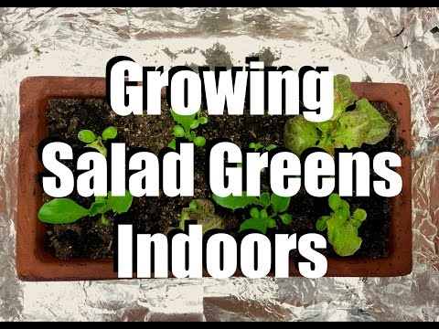 How to Grow Salad Greens Indoors & 2 Easy Indoor Grow Light Set Ups // Growing Your Indoor Garden #4