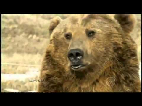 Brutus, the pet grizzly bear