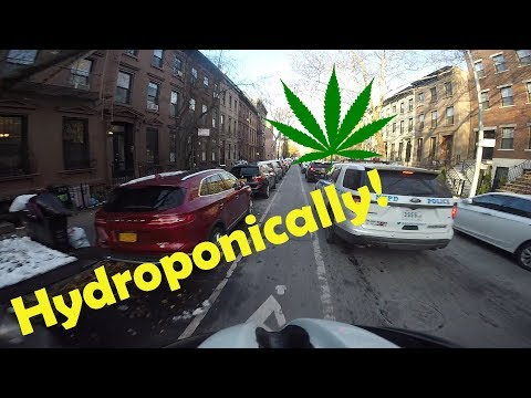 STORY TIME - Selling Hydroponic WEED in Highschool - S4E42