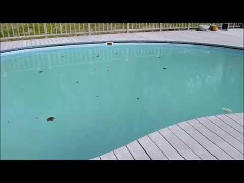 Making a Green Swimming  Pool Blue Again.