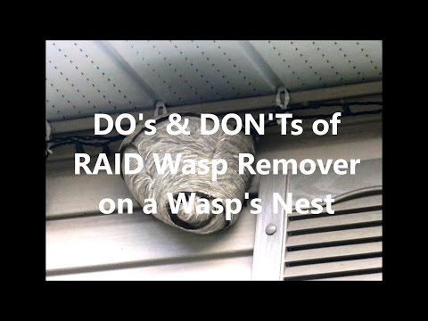 Dos and Donts of RAID Wasp Killer on a wasp nest