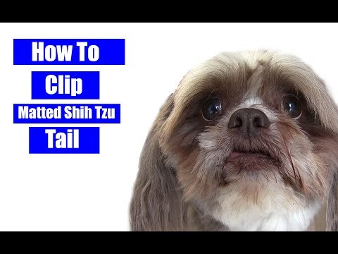 How To Clip A Matted Shih Tzu Tail