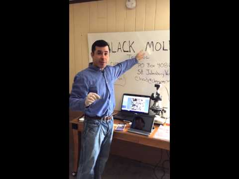 Black mold test $10 toxic mold, indoor air quality expert