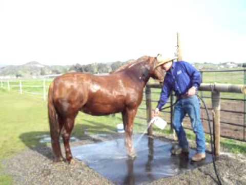 Equine Challenge - Treating Sweet Itch, Rain Rot, Dander, Dandruff, itchy/flakey skin, Tail Rubbing