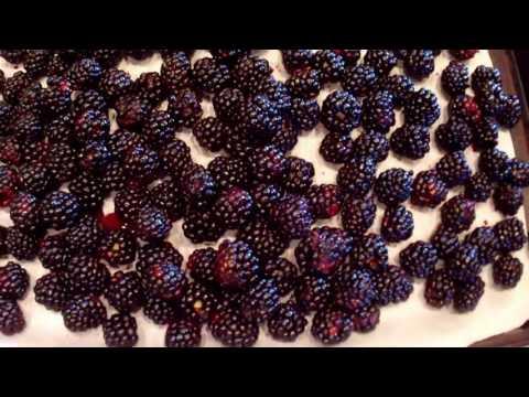 Harvesting Elderberries & Blackberries...Plus Wine