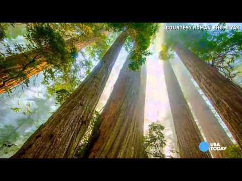 Ken Burns: Secrets of Redwood, Sequoia national parks
