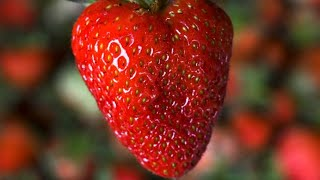The Gross Reason You Should Soak Your Strawberries In Salt Water