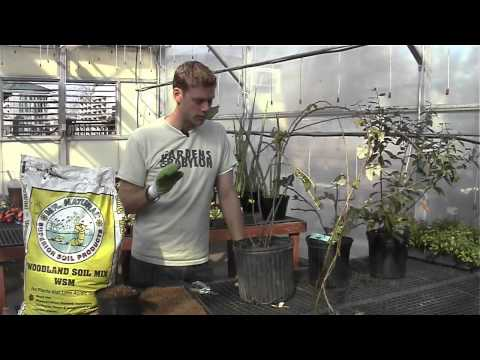 How to Care for Berry Plants
