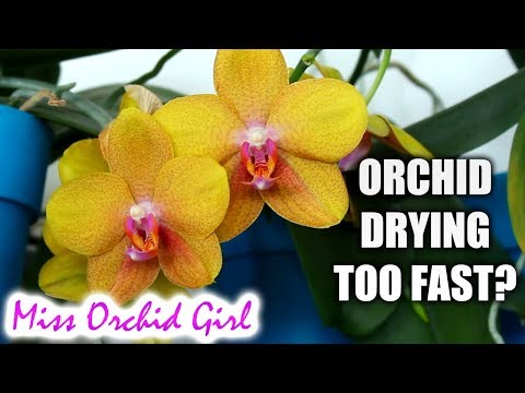 Orchid Q&A #18 - Leathery leaves, when to water Orchids & more!