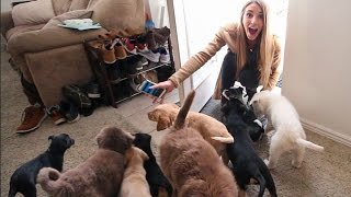 Husband Surprises Wife by Filling House With Puppies!