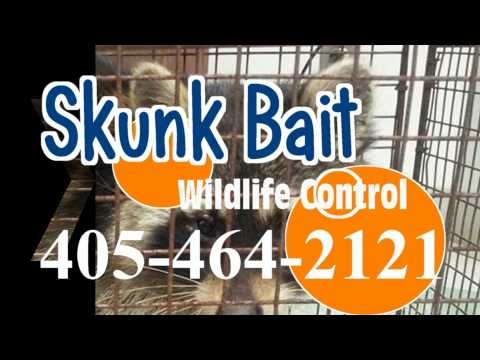 Guthrie OK squirrel removal (405) 464-2121 squirrel removal Guthrie