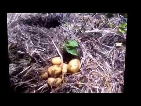 Ruth Stout method of gardening