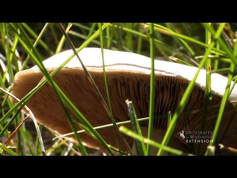 Managing Mushrooms in the Lawn | From the Ground Up