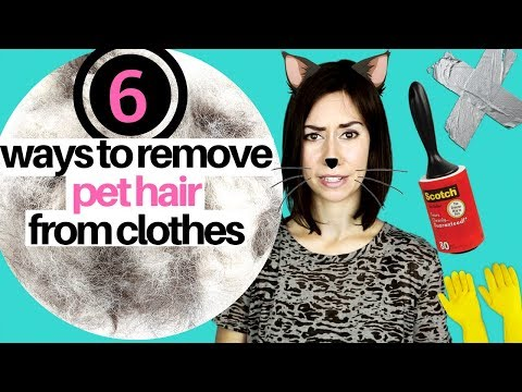 6 WAYS TO REMOVE PET HAIR FROM CLOTHING