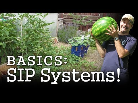 Self-watering Planter Basics: DIY Gardening with Sub-irrigated Wicking Beds (Albopepper)