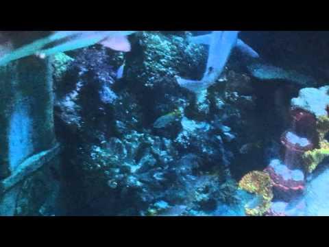 Atlantis Voyage (Legoland Windsor)