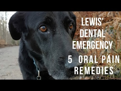 Lewis' Painful Mouth: Dental Pain Remedies
