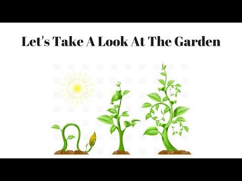 Garden Update First Week of June 2018