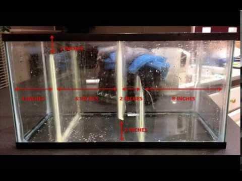 DIY Freshwater Filtration Sump Tank
