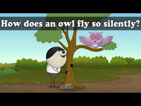 How does an owl fly so silently? | It's AumSum Time