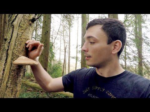 Magic Medicinal Mushroom! - vlog episode 30