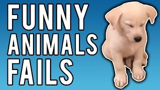 Funny Animal Fails January 2017 | A Fail Compilation by FailUnited