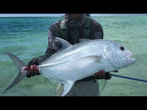 Fly Fishing Christmas Island Giant Trevally May 2018 (Kiritimati, Kiribati)
