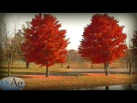Pruning Landscape Trees (How-To)