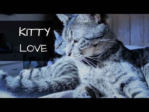 Rescued Cats Snuggle and Groom Each Other   Kitty Love