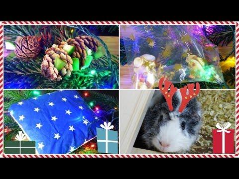 3 Easy DIY Gift Ideas For Guinea Pigs | Pigmas 2015