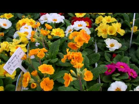 Bedding Plants Bonhard Nursery Scone Perth Perthshire Scotland