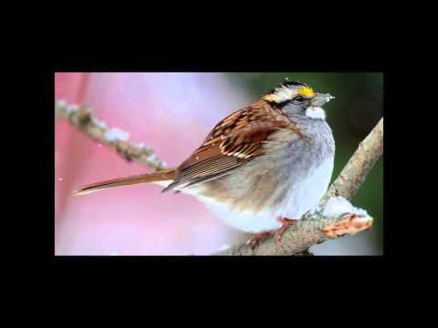 How Birds Survive the Winter Herb Wilson Waterville Maine Pecha Kucha Vol. 19