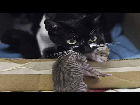Cats are better than dogs – science has confirmed it!