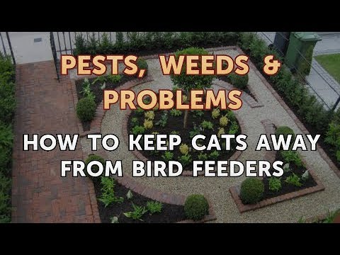 How to Keep Cats Away From Bird Feeders