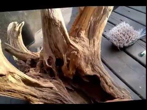 Cleaning a Large Driftwood Root Stump for Aquarium Terrarium Garden Landscape