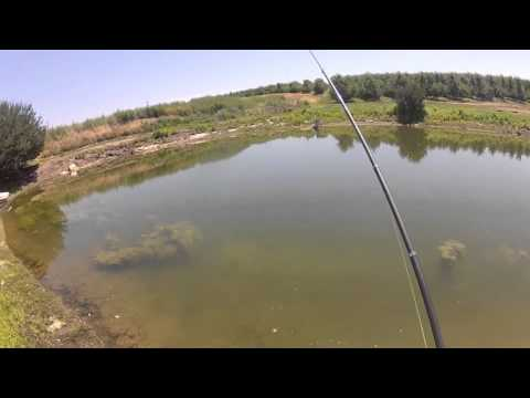 Bluegill on pen fly rod with penfishingrods.com