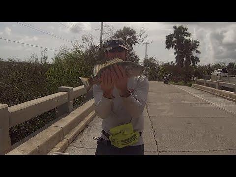 BIG Mangrove Snapper from the Bridge