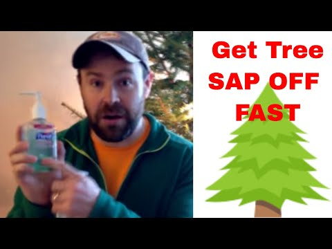 HOW TO GET TREE SAP OFF YOUR HANDS IN 3 SECONDS