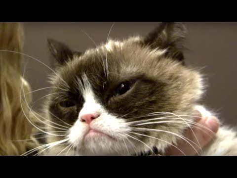 "Grumpy Cat & friends hang out at the Friskies SXSW ""Haus of Bacon"""