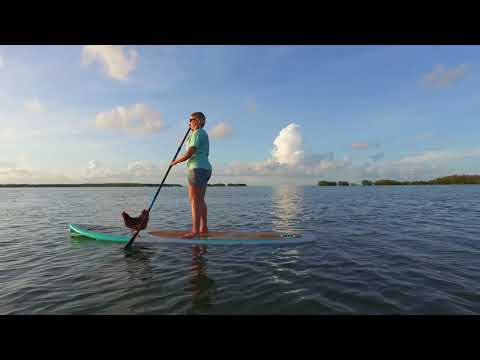 Florida Keys Paddleboarding Chicken is 'Poultry in Motion'