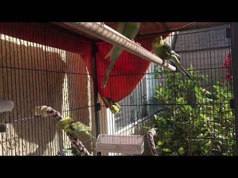 Releasing Birds Into Our Aviary