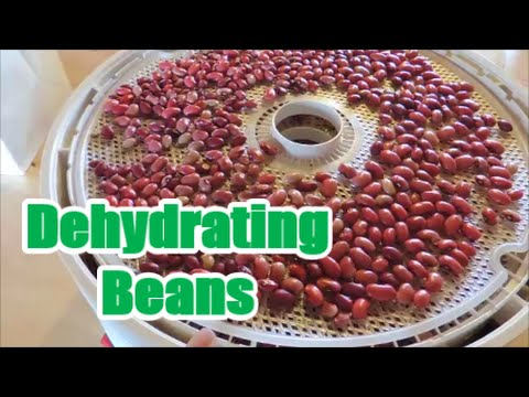 Dehydrating Beans for Storage