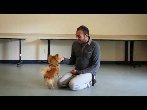 Tip Tuesday: How To Stop A Dog From Licking People