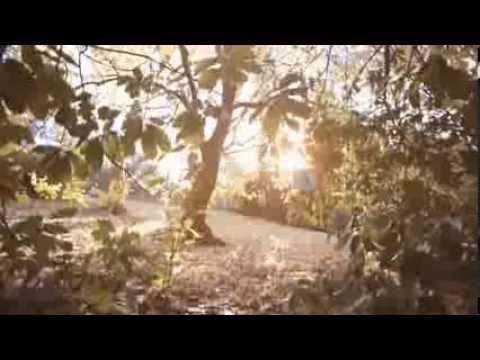 First Rush Music Video