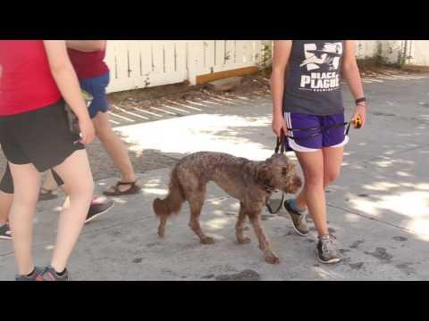 Managing Dog Aggression Long Term