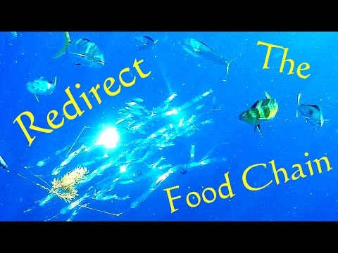 Redirect The Food Chain