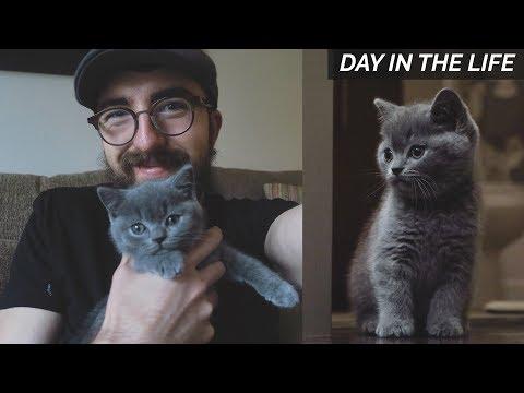 I GOT A KITTEN!